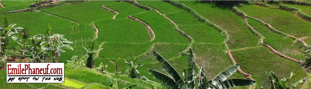 Indonesian rice terraces