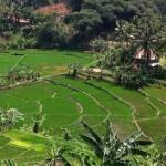 Rural, Indonesia (2011)